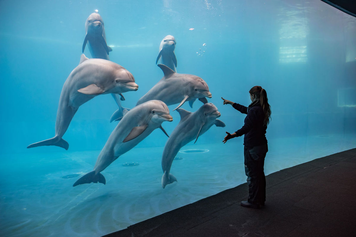 aquarium di genova